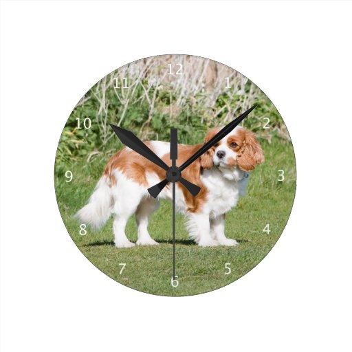 Belle photo du Roi Charles de chien cavalier d'épa Horloges