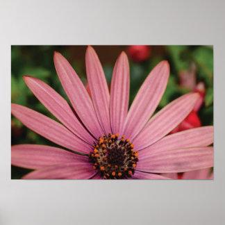 Belle photo en gros plan de fleur posters