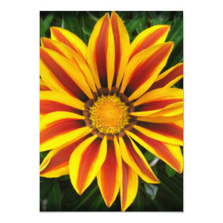 Belle photo orange de fleur de Sun Carton D'invitation 12,7 Cm X 17,78 Cm