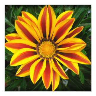 Belle photo orange de fleur de Sun Carton D'invitation 13,33 Cm