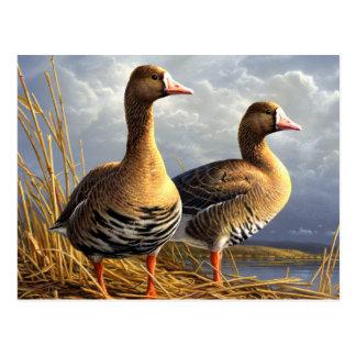 belles cartes postales 29 d'oiseaux