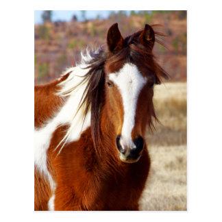 Belles cartes postales de cheval de peinture