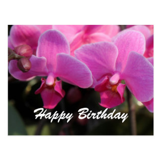 Belles fleurs roses d'orchidée. Souhaits Cartes Postales