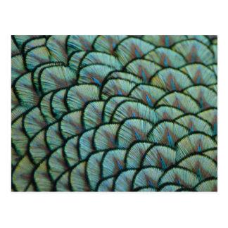 Belles textures naturelles - plumes de paon carte postale