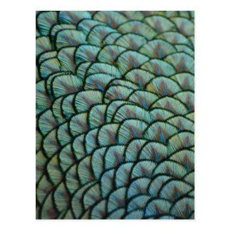 Belles textures naturelles - plumes de paon cartes postales