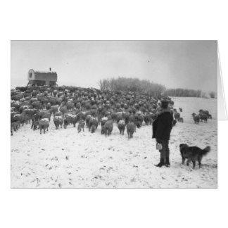 Berger avec le troupeau carte de vœux