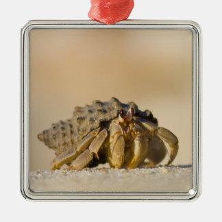 Bernard l'ermite sur la plage blanche de sable ornement carré argenté