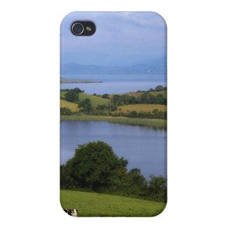 Bétail du Holstein-Fresian, baie de Bantry, liège Coque iPhone 4 Et 4S