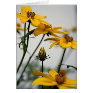 Bidens jaune - photographie florale cartes de vœux