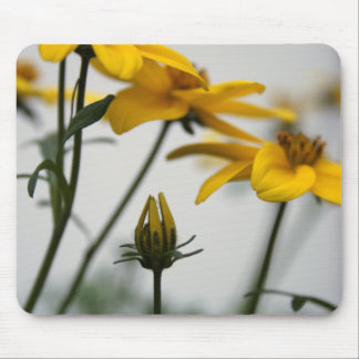 Bidens jaune tapis de souris