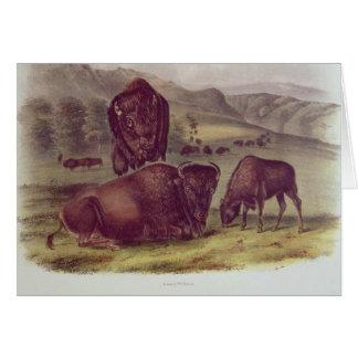 Bison américain ou Buffalo Carte De Vœux