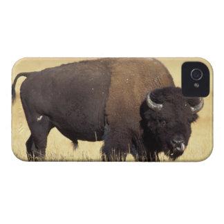 bison, bison de bison, taureau dans le coque Case-Mate iPhone 4