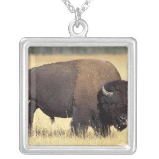 bison, bison de bison, taureau dans le pendentif carré