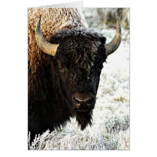 Bison Cartes