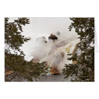 Bison chaud et humide en parc national de carte de vœux