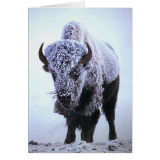 Bison dans la carte de voeux de neige