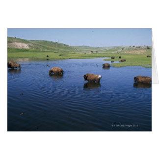 Bison dans l'eau avec de nombreuses hirondelles de carte de vœux