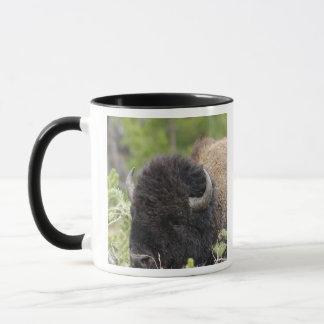 Bison de Taureau se reposant dans la forêt, Mug