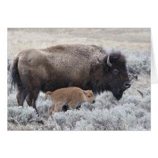 Bison de vache et de veau, Yellowstone 2 Carte De Vœux