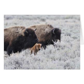Bison de vache et de veau, Yellowstone Carte De Vœux