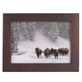 Bison en hiver boîtes à souvenirs