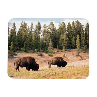 Bison en parc national de Yellowstone, Wyoming Magnets Rectangulaires