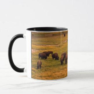 Bison frôlant sur la colline à la vallée de Hayden Mug
