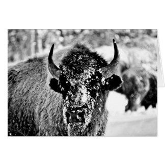 Bison givré de Yellowstone Carte De Vœux