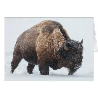 Bison marchant dans la neige carte de vœux