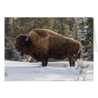 Bison se tenant dans la neige carte de vœux