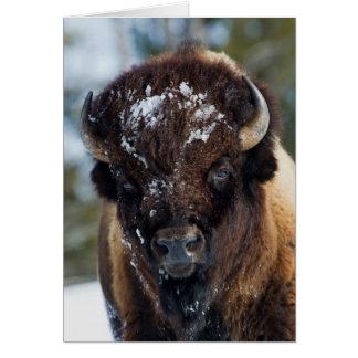 Bison Taureau, hiver 1 Carte De Vœux
