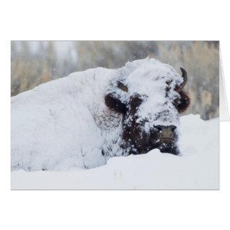 Bison Taureau, manteau d'hiver Carte De Vœux