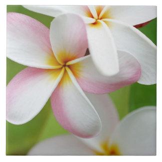 Blanc customisé par fleur d'Hawaï de Frangipani de Grand Carreau Carré