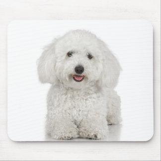 Blanc de chien maltais tapis de souris