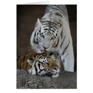 Blanc et repos de tigres de Brown Carte De Vœux