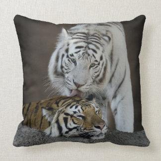 Blanc et repos de tigres de Brown Coussin Décoratif