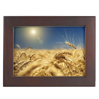 Blé d'or et ciel bleu avec le soleil boîte à souvenirs