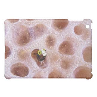 Blenny de Spinyhead (spinosa d'acanthemblemaria) Étui iPad Mini