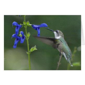 Bleu 2 de saphir de salvia d'oiseau de ronflement carte de vœux