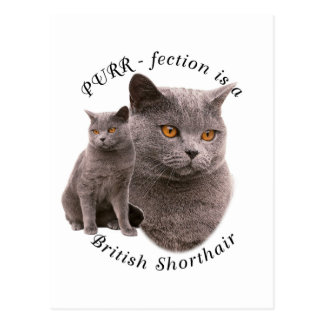 Bleu britannique de shorthair de PPURR-fection Cartes Postales