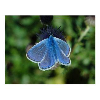 Bleu commun de papillon sur la carte postale de