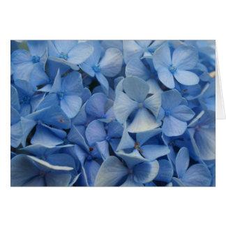Bleu de la Caroline Carte De Vœux