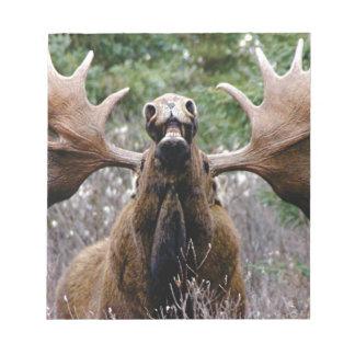 Bloc-note d'orignaux étranges de taureau