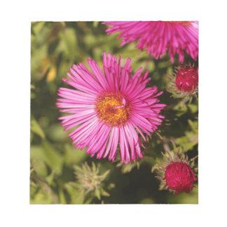 Bloc-note Fleur d'un aster de Nouvelle Angleterre