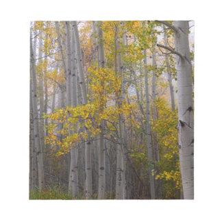 Bloc-note Lumière de forêt d'Aspen