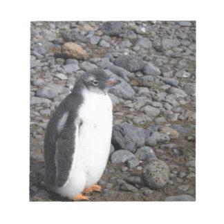 Bloc-note Poussin de pingouin de Gentoo au bluff de Brown