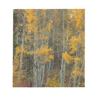 Bloc-note Région sauvage de forêt d'Aspen