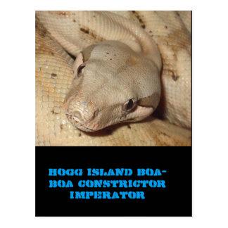 Boa d'île de Hogg Carte Postale