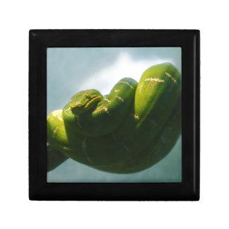 Boa vert d'arbre boîte à souvenirs