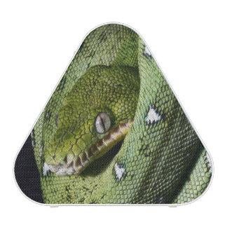 Boa vert de serpent vert d arbre en Bolivie